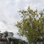 Nhà mặt tiền khu biệt thự Phạm Phú Tiết, song song Nguyễn Hữu Thọ